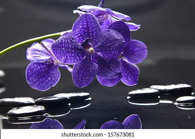 spa concept �branch purple orchid with stones reflection