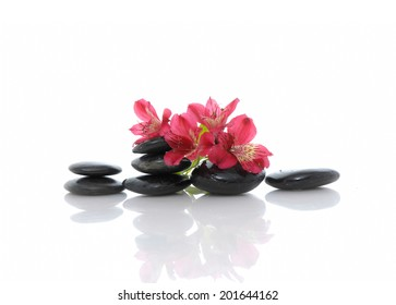 Spa concept with red orchid and black stone