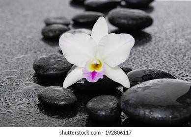 spa concept white orchid with black stones
