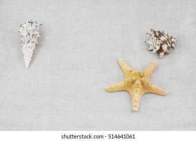 SPA objects. Starfish and seashell background.