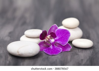 Spa still life with pink orchid and white zen stones
