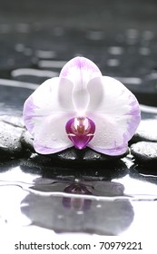 Spa still life with white orchid and stone reflection