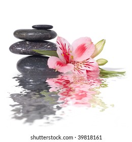 Spa still life with wild pink orchid isolated on white background