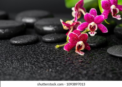 spa still life of zen stones with dew, mini orchid (phalaenopsis) and green leaves, copy space