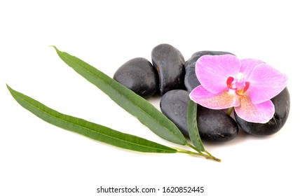 Spa stones and orchid isolated on white background. Pink flower and green leaves.