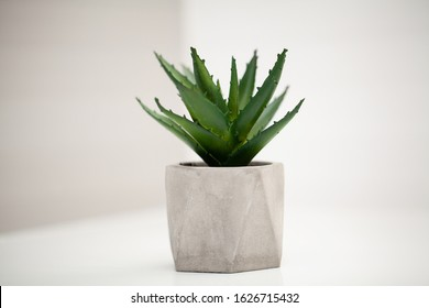 Spa. Succulent plant on window ledge in modern bathroom