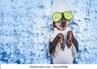 Spa treatments. A dog in his pajamas. Mask of cucumbers. A dog with cucumbers.