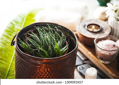 Spa and wellness. Spa products in natural setting Close up of aloe vera