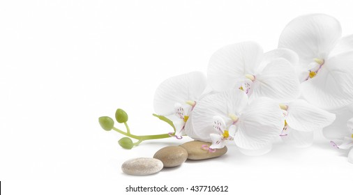 Spa white orchid with massage stones on white background