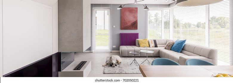 Spacious living room with colorful decorative elements and with dog lying on grey carpet