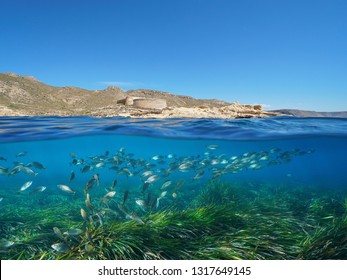 Spain Andalusia coast with a castle and school of fish with Posidonia seagrass underwater Mediterranean sea, el Playazo de Rodalquilar, Almeria, split view half over and under water