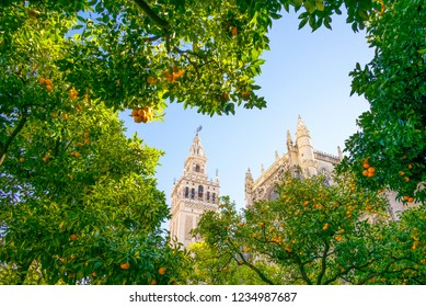 Spain, Andalusia, Seville, the Cathedral bell tower seen from the orange tree courtyard