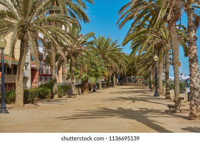 SPAIN, Calella - SEPTEMBER 15, 2016: The palm alley in a sunny bright weather in Callela, Spain.
