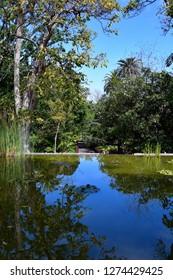 Spain, Canary Islands, Tenerife, pond with reflection from plants in botanical garden of Puerto de la Cruz