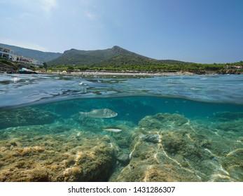 Spain coastline with beach and fish with rocks underwater, Mediterranean sea, Costa Brava, El Port de la Selva, Platja de la Vall, Catalonia, split view over and under water