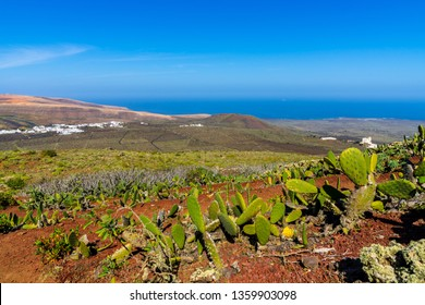 Spain, Lanzarote, Dry volcanic nature landscape behind green cactus on volcano corona near ye