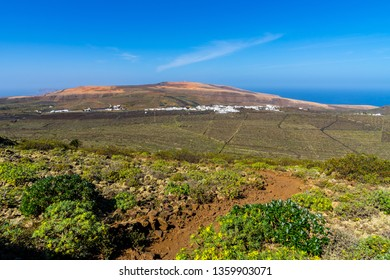 Spain, Lanzarote, Green cactus and winegrowing fields of terraces of village ye from volcano corona