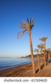Spain, Marbella, beach with palm trees on Costa del Sol at Mediterranean Sea