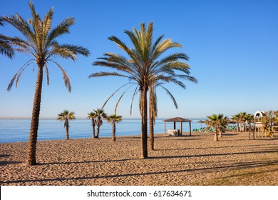 Spain, Marbella, beach with palm trees in resort city on Costa del Sol at Mediterranean Sea.