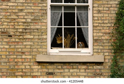 A spaniel watches from the window.