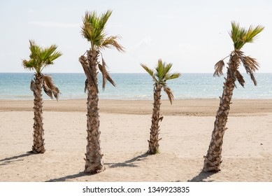 Spanish beach in a daytime with palms