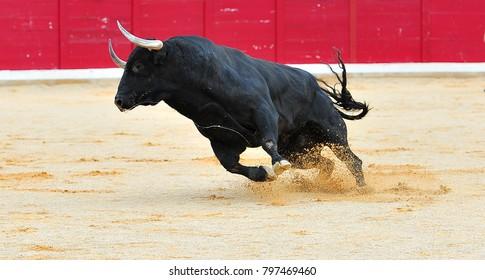 spanish bull in spain