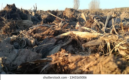 Spanish field with natural organic fertilizer. Dung scattered across the earth. Ecological agriculture. Contrast of natural brown colors and blue calm sky. Rural landscape. Manure.