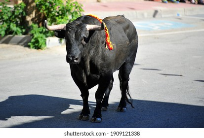 A spanish fighting bull with big horns on the bullring