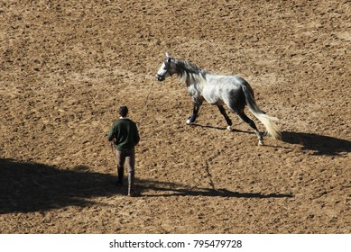 "A Spanish man ""longing"" a grey Andalusian horse, a form of horse training where a horse works at the end of a lunge line in circles."