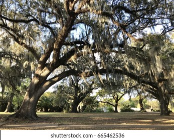 Spanish Moss in City Park, New Orleans