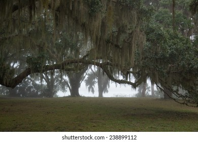 Spanish Moss covered trees in a mist, from Cumberland Island, Georgia, USA
