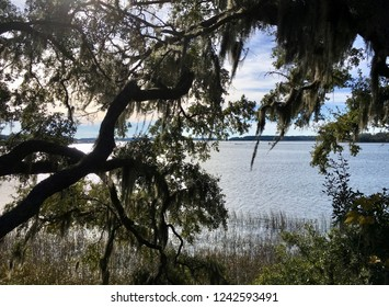 Spanish Moss hanging from an old tree