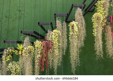 spanish moss hanging on stairs stock photo edit now 696666184
