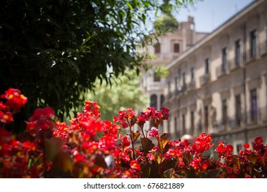 Spanish street with ancienct old buldings street canyon with blue sky on a sunny day in cartegena with green leaves of a bush and red flower in focus in murcia in spain
