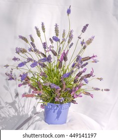 Spanish/French lavender flowers. (LAVANDULA STOECHAS)