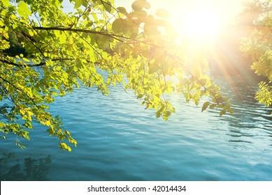 sparkle sun pushing through a foliage