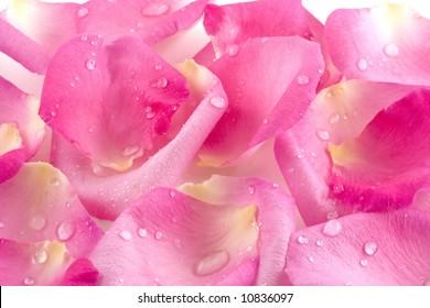 Sparkling dew drops rest on softly textured pink rose petals.