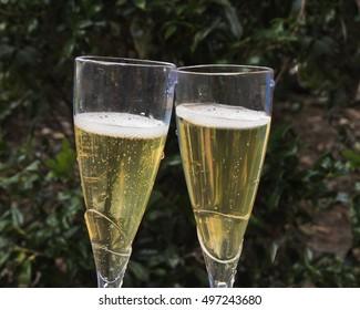 Sparkling Wine in glasses/Champagne Toast/Bubbles in golden liquid