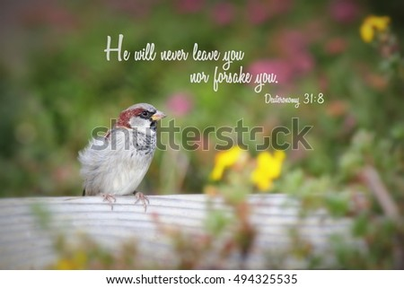 Sparrow Bird Perched On Fence Post Stock Photo Edit Now 494325535