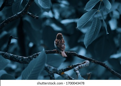 Sparrow bird sitting on tree branch. The lone sparrow sits on a branch in the blue nature and looks at the space.