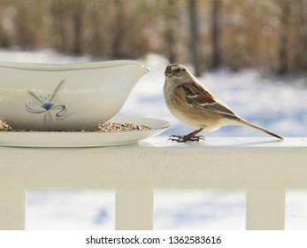 Sparrow eating birdseed from a pretty glass dish.