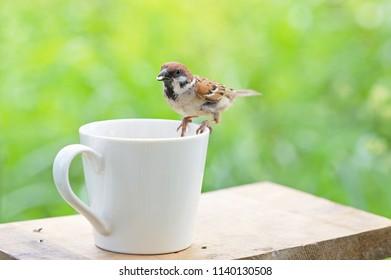 A sparrow eating on bird table.
