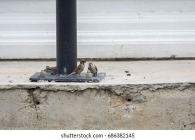 Sparrow feeds on the bird on the floor of the base of the fire.