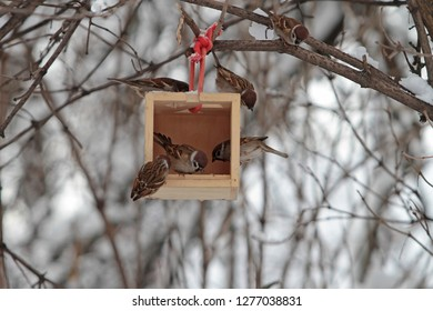 Sparrow flies spreading its wings soars from the trough. Birds are eaten in a manger outside to escape hunger in cold winter.