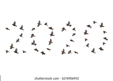 Sparrow flock flying in sky, isolated, 2020 year shape. New year concept. Group of small birds.