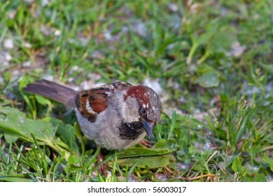 sparrow in the grass in summer