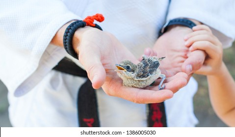 Sparrow  in the hands of a man. Sparrow sitting in human`s hand in kimono, judo dress, aikido gi with black belt outdoors.