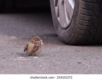 Sparrow near Wheel