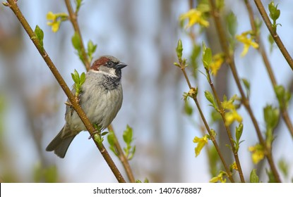 Sparrow on branch with sky
