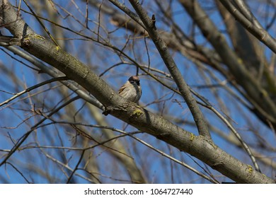 sparrow on the tree